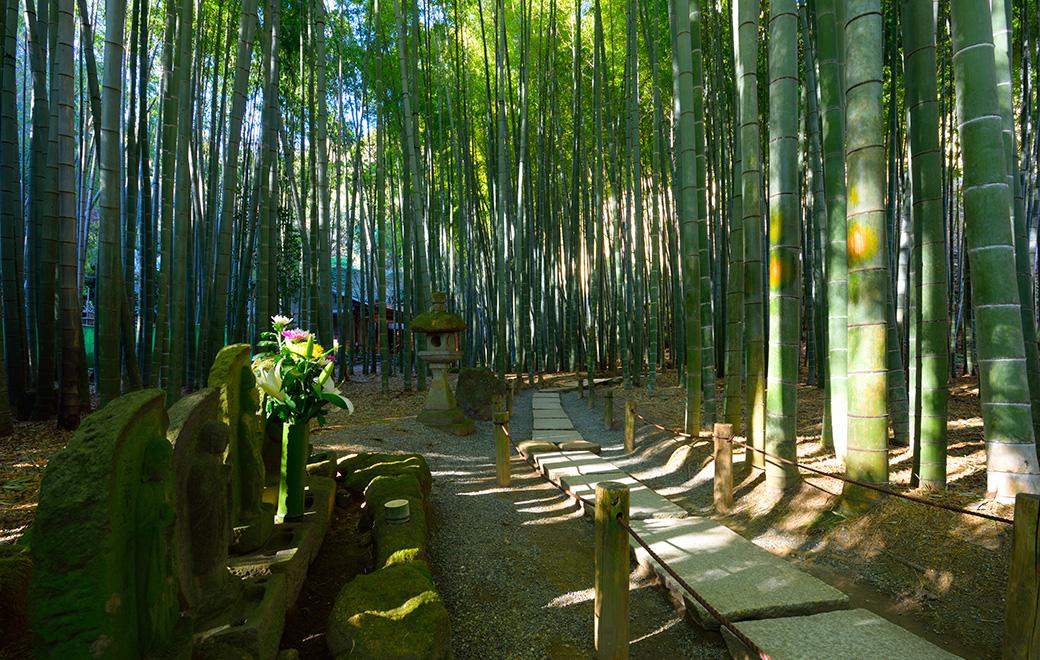 about kamakura  official visitor guide visit kamakura